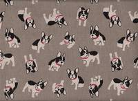Boston Terrier grau