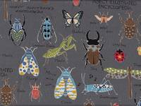 Insect Encyclopedia grau