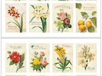 Stamp Sticker Botanical